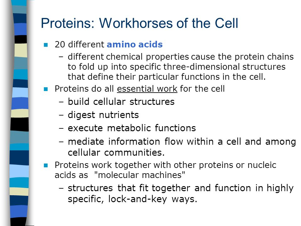 Proteins: Workhorses of the Cell