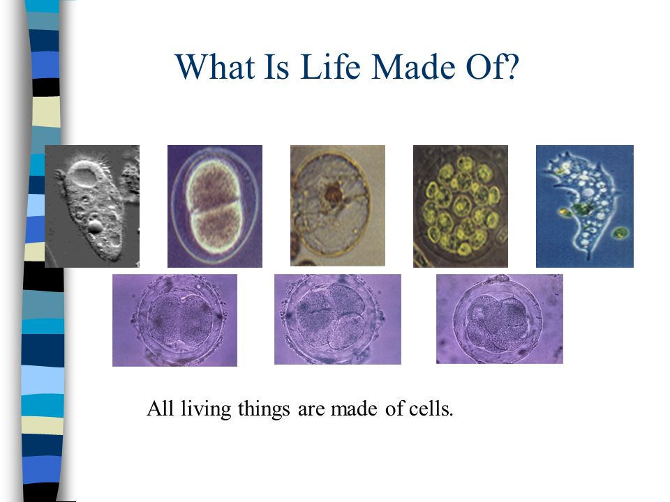 What Is Life Made Of All living things are made of cells.