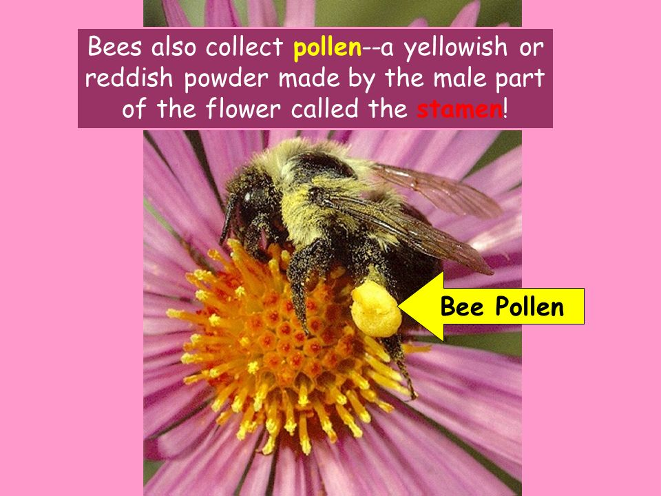 F l o w e r s click the mouse or press the space bar to continue bees also collect pollen a yellowish or mightylinksfo Images
