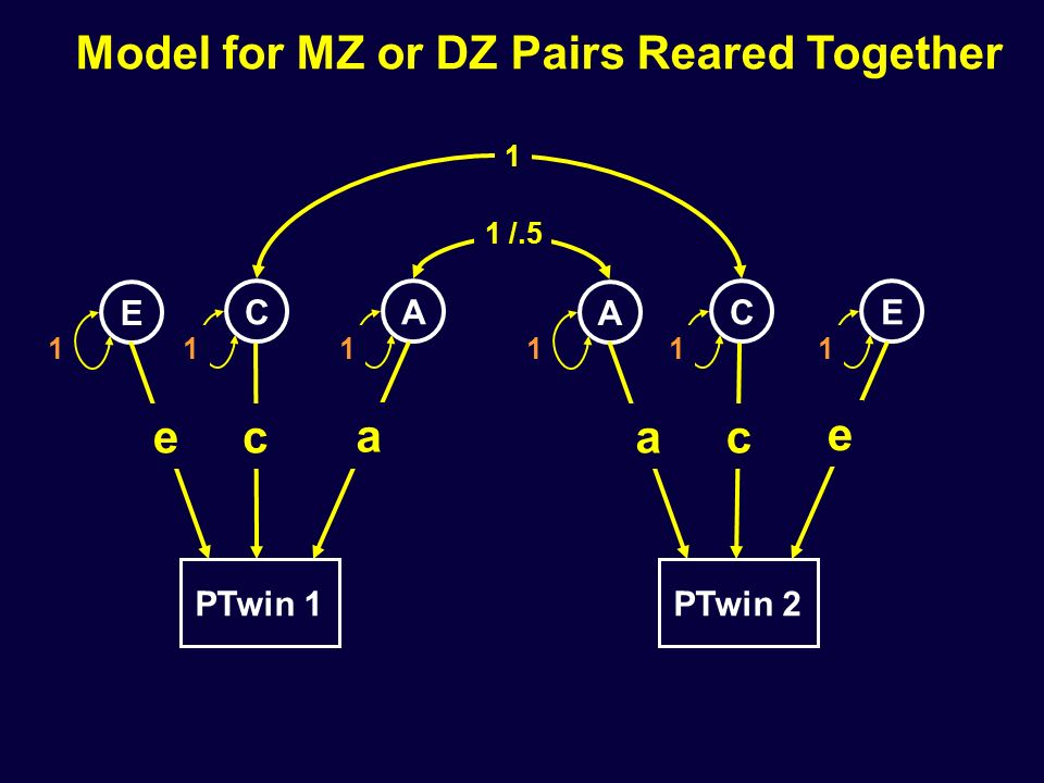 Model for MZ or DZ Pairs Reared Together