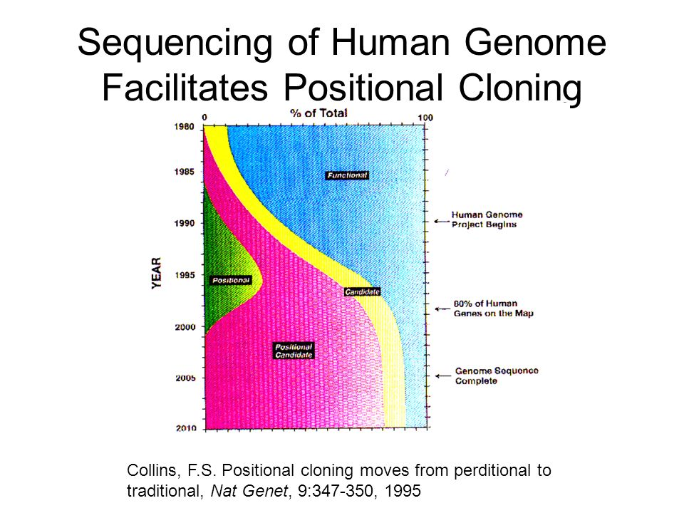 Sequencing of Human Genome Facilitates Positional Cloning