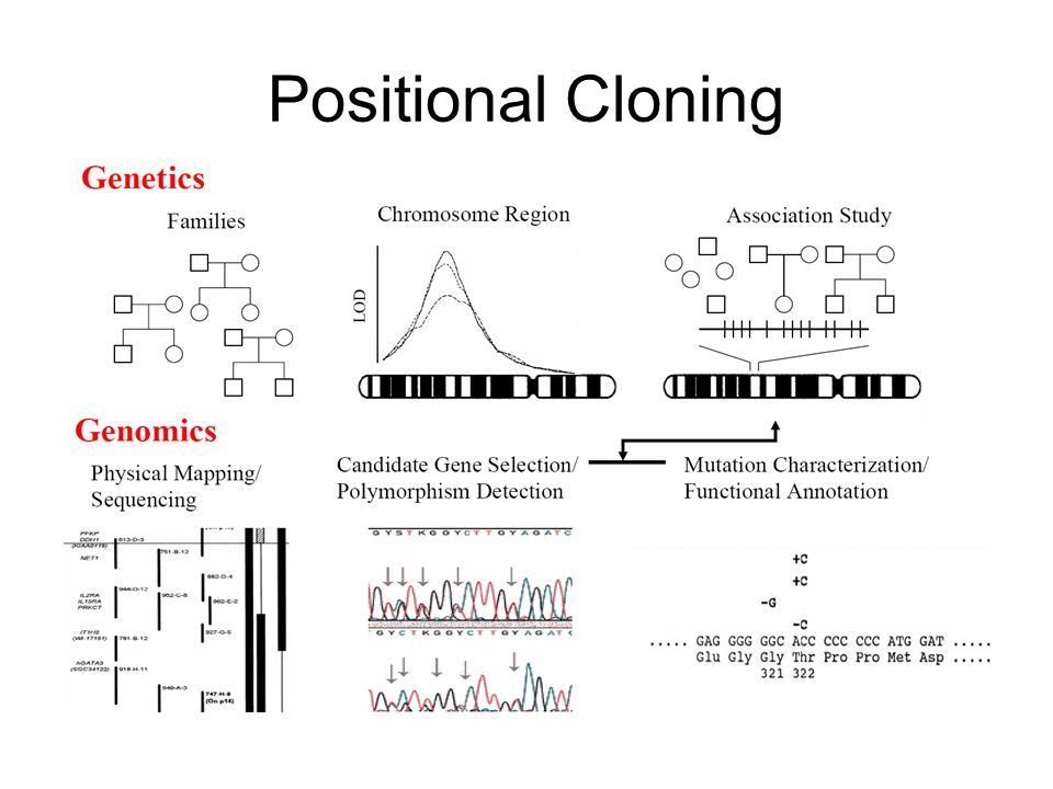Positional Cloning