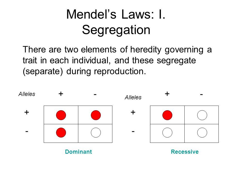 Mendel's Laws: I. Segregation