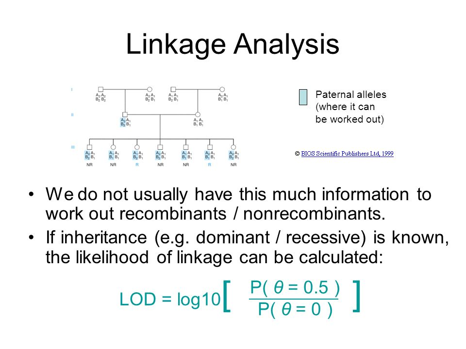 Linkage Analysis Paternal alleles (where it can be worked out)