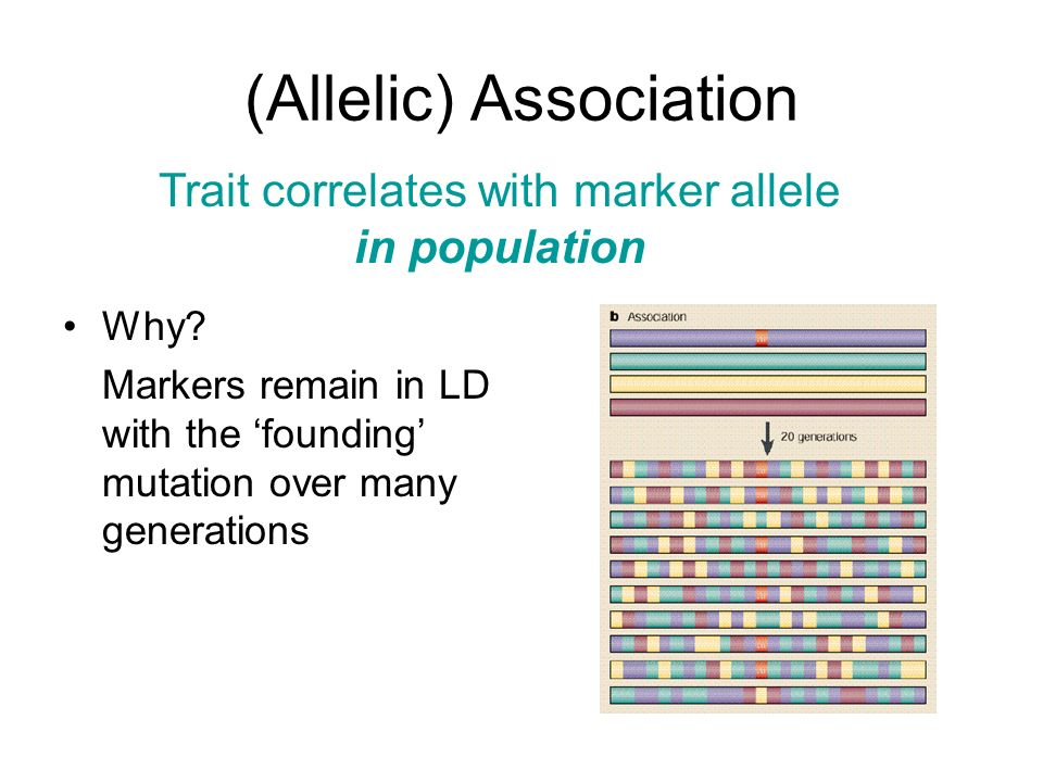 (Allelic) Association