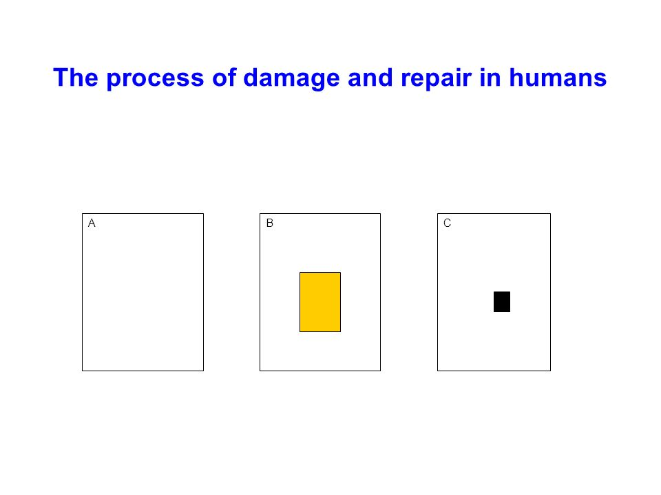 The process of damage and repair in humans