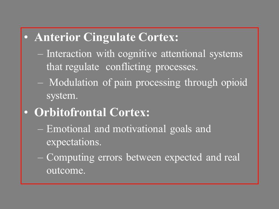 Anterior Cingulate Cortex: