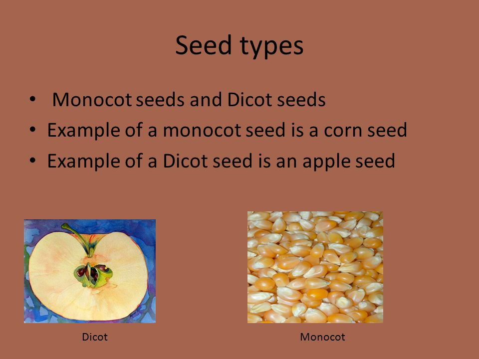 10 Examples of Dicot Plants - Bing images 10 Examples Of Monocot Plants