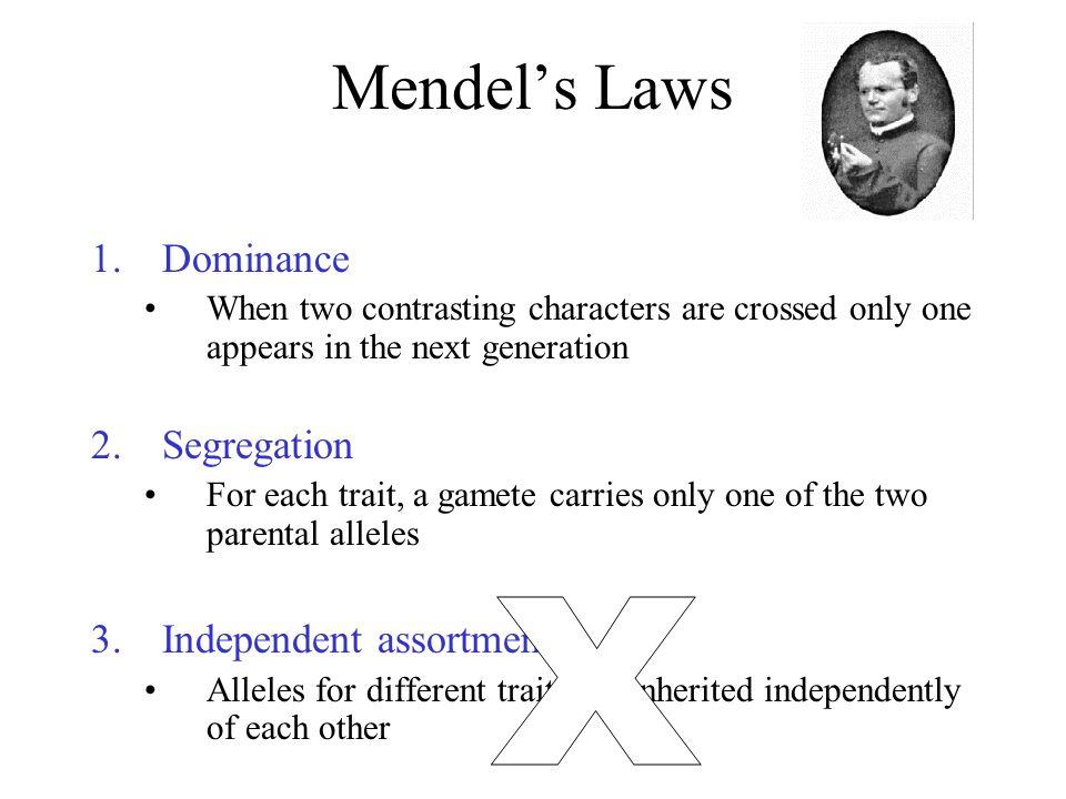 X Mendel's Laws Dominance Segregation Independent assortment