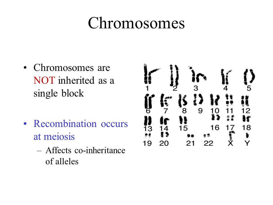 Chromosomes Chromosomes are NOT inherited as a single block