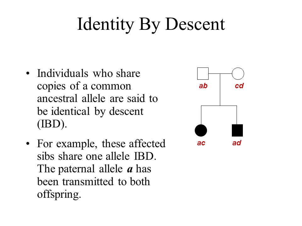 Identity By Descent Individuals who share copies of a common ancestral allele are said to be identical by descent (IBD).