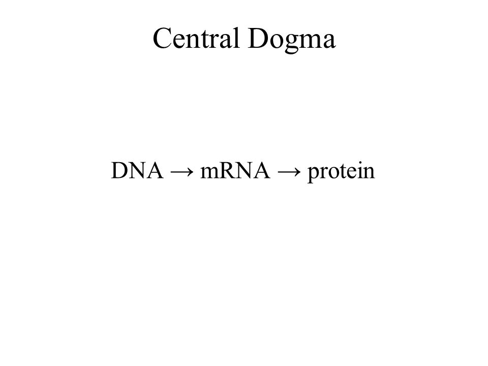 Central Dogma DNA → mRNA → protein