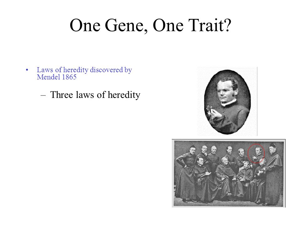 One Gene, One Trait Three laws of heredity