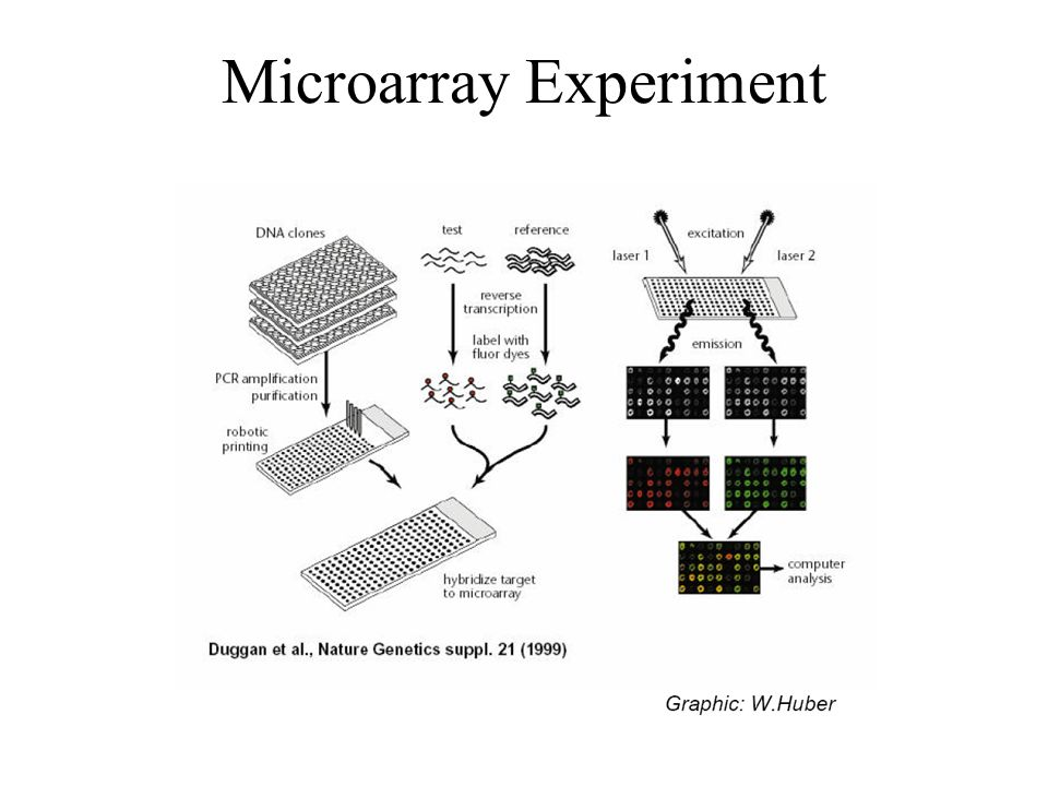 Microarray Experiment