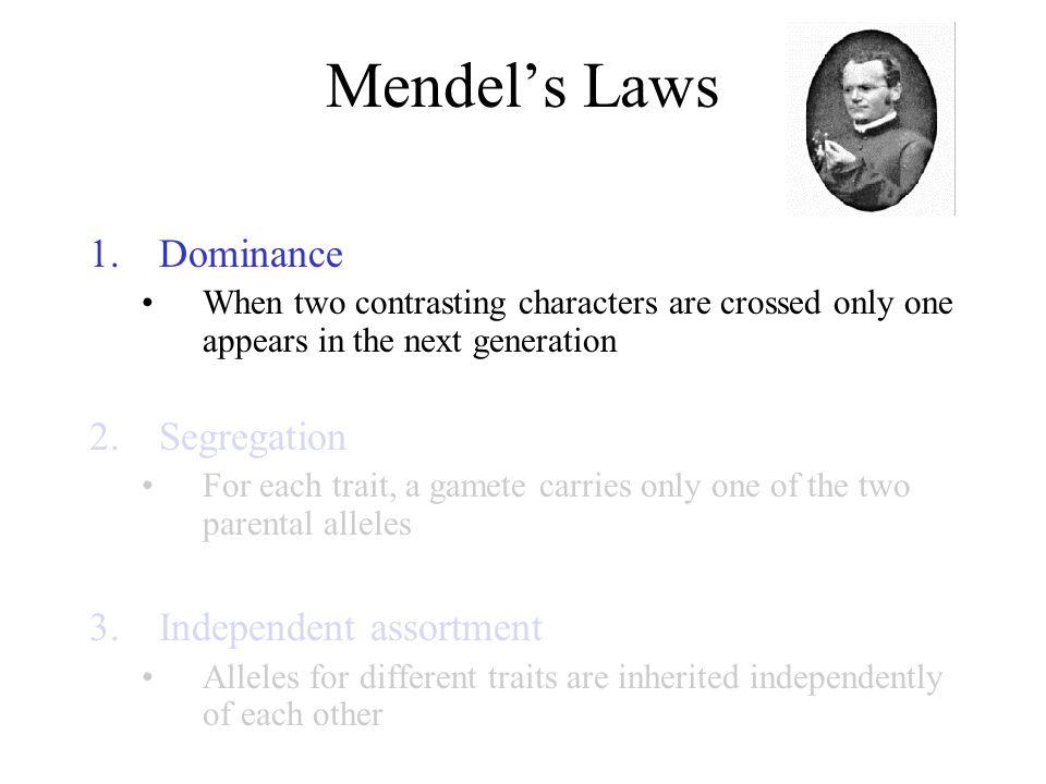 Mendel's Laws Dominance Segregation Independent assortment