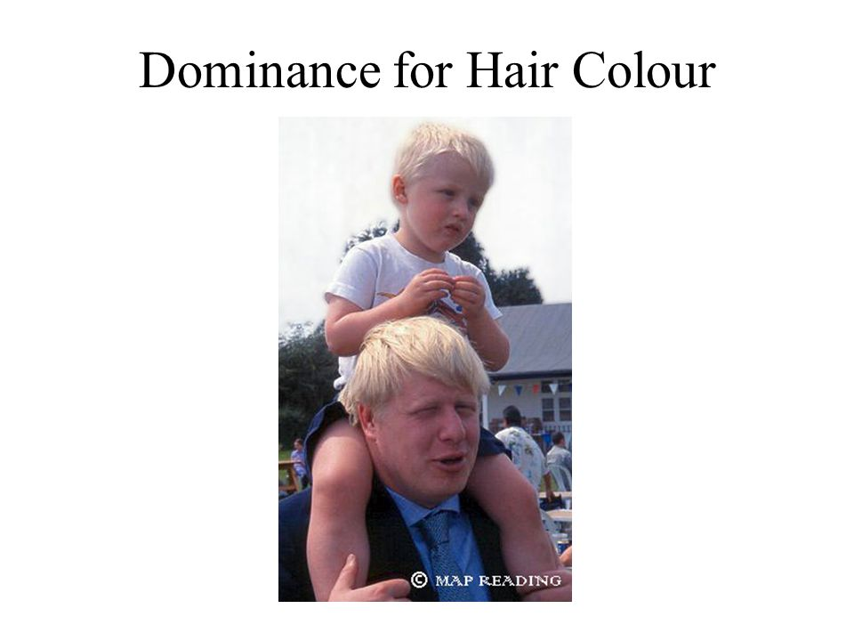 Dominance for Hair Colour