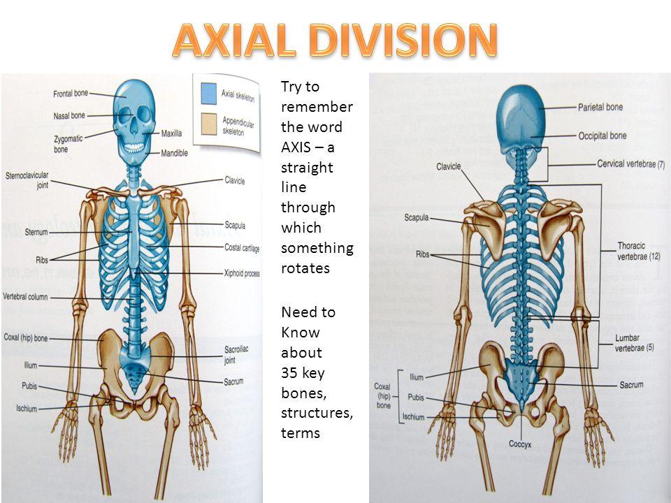 Berühmt Axial In Der Anatomie Galerie - Anatomie Ideen - finotti.info