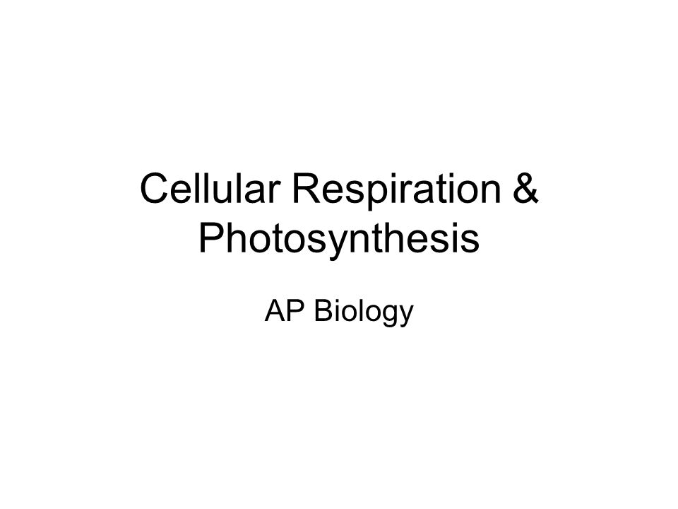 ap bio essay photosynthesis cellular respiration Study flashcards on ap biology - cellular respiration and photosynthesis at cramcom quickly memorize the terms, phrases and much more cramcom makes it easy to get the grade you want  essays essays home flashcards  cellular respiration and photosynthesis ap biology - cellular respiration and photosynthesis.