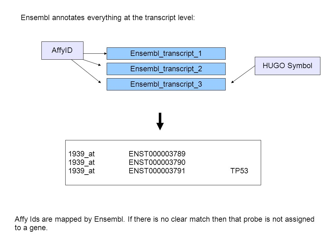 Ensembl annotates everything at the transcript level: