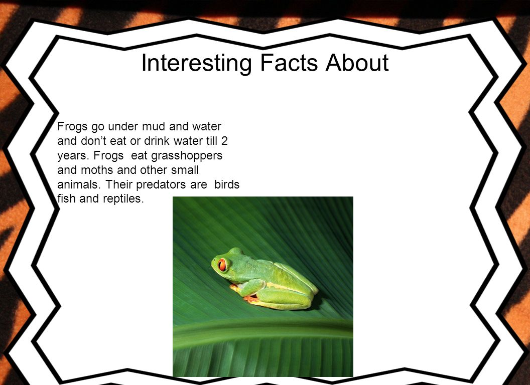 My animal report cover page title of the report author for Interesting facts about fish