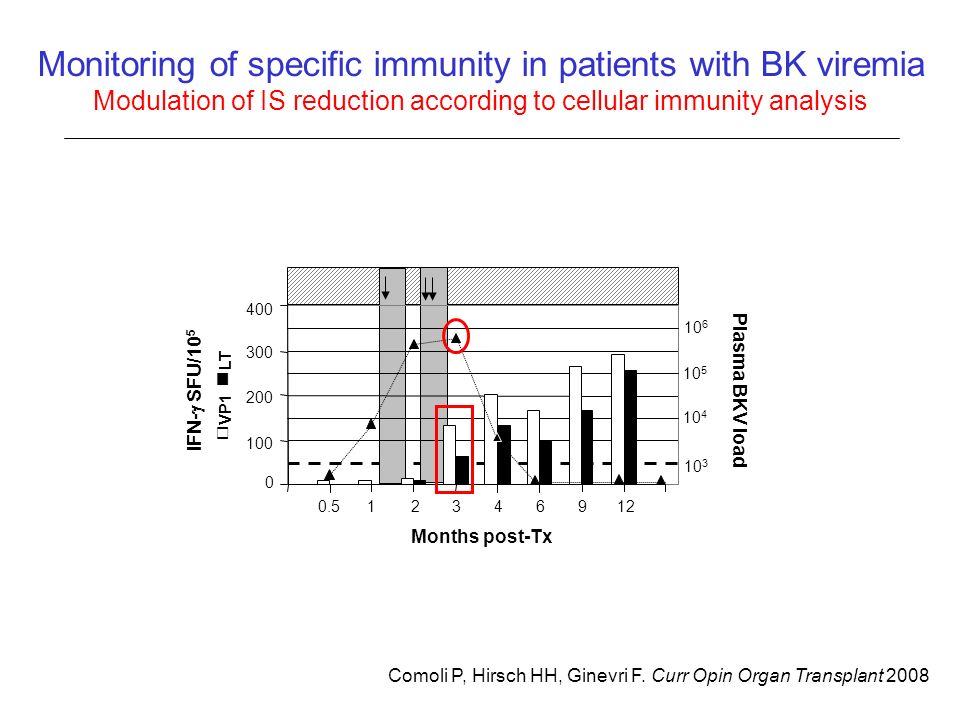 Monitoring of specific immunity in patients with BK viremia