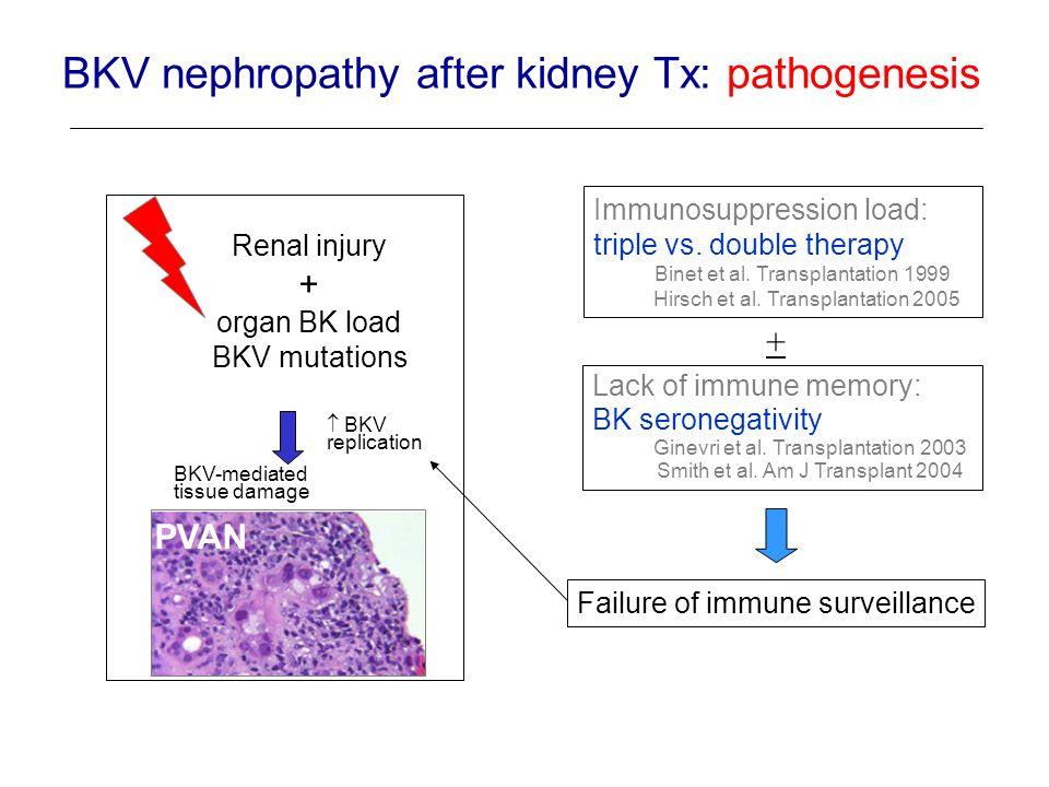 BKV nephropathy after kidney Tx: pathogenesis