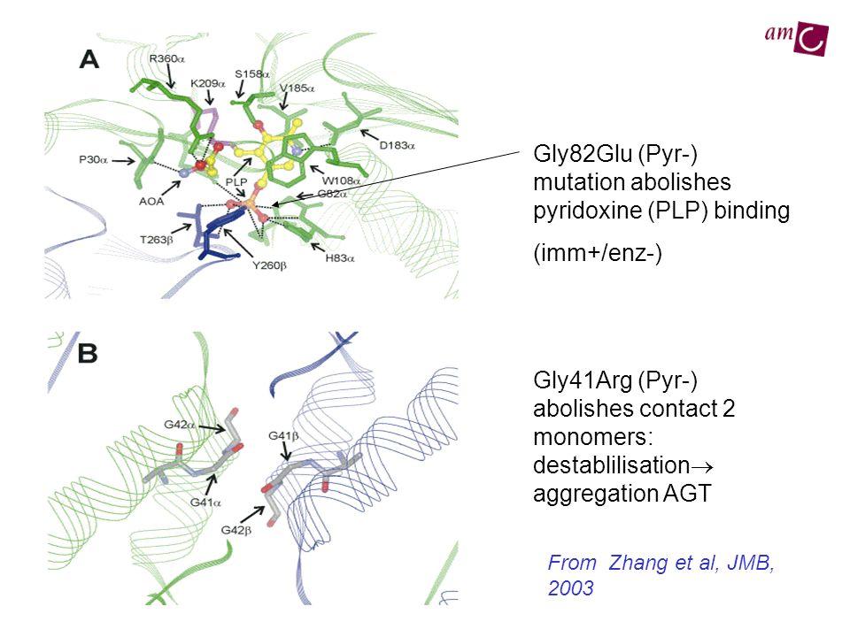 Gly82Glu (Pyr-) mutation abolishes pyridoxine (PLP) binding