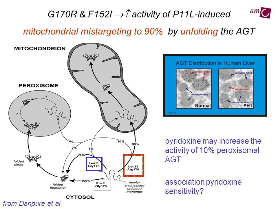 G170R & F152I  activity of P11L-induced mitochondrial mistargeting to 90% by unfolding the AGT