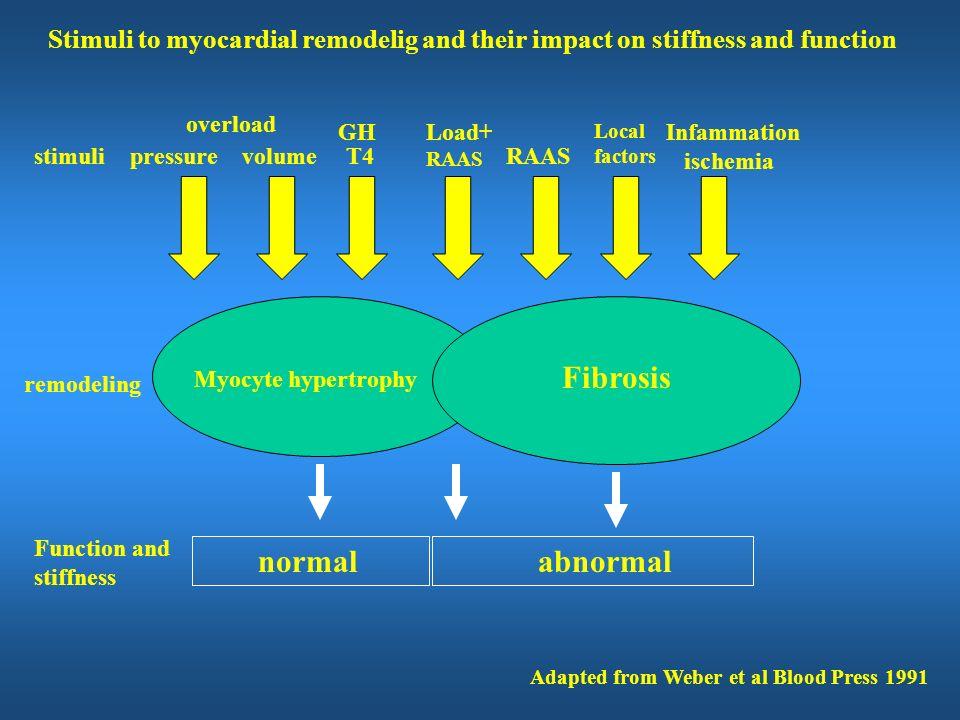Fibrosis normal abnormal