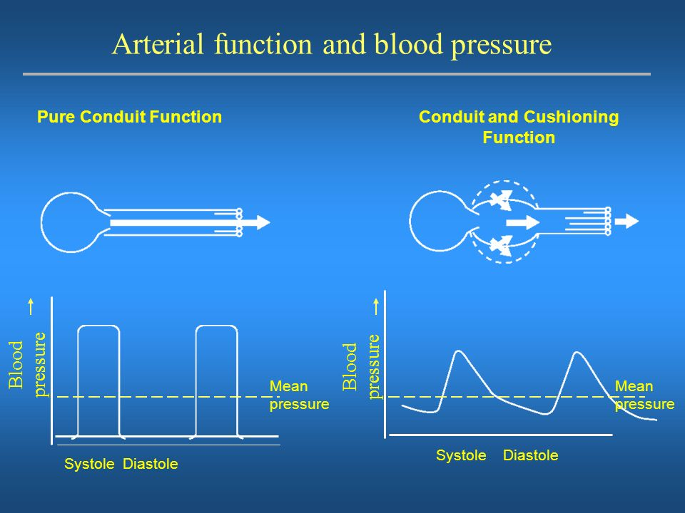 Arterial function and blood pressure
