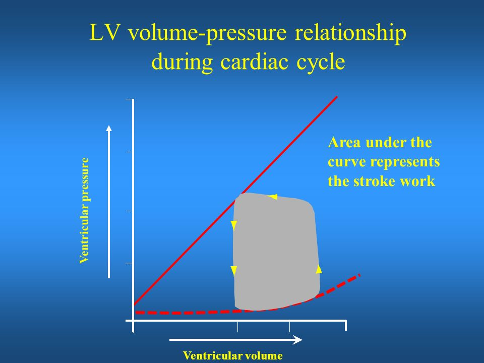 LV volume-pressure relationship during cardiac cycle