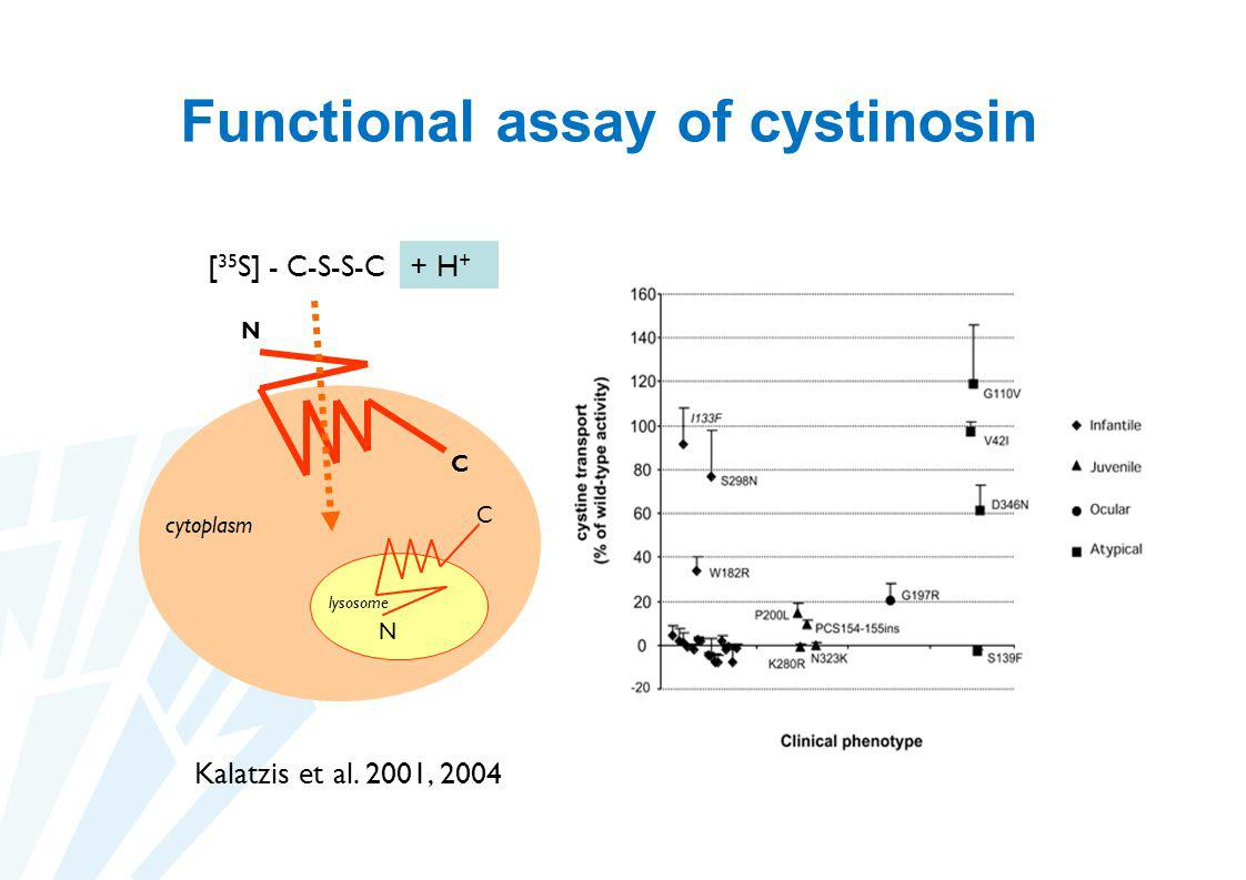 Functional assay of cystinosin