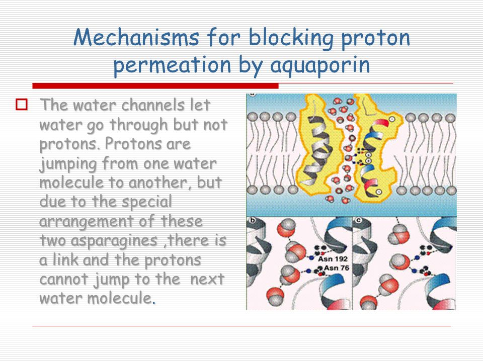 Mechanisms for blocking proton permeation by aquaporin
