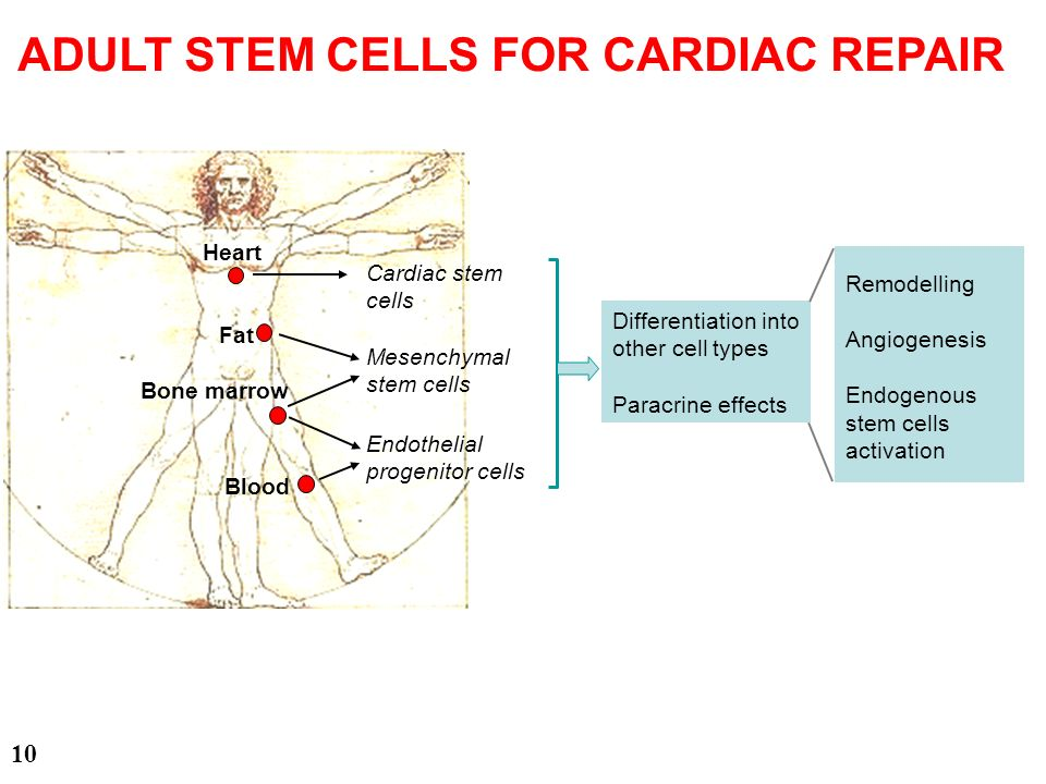 ADULT STEM CELLS FOR CARDIAC REPAIR
