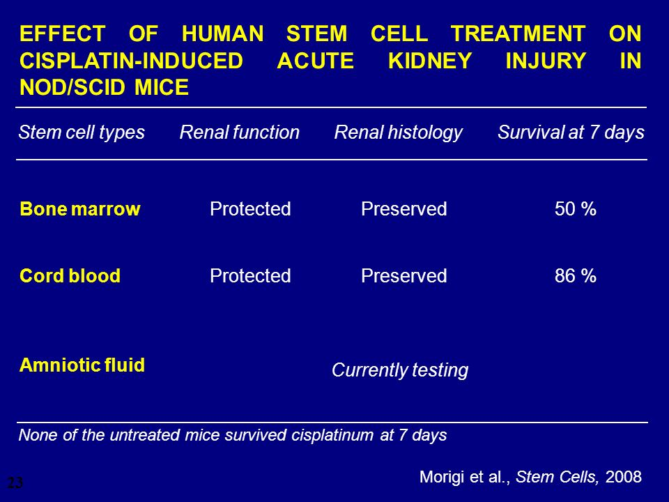28/03/2017 EFFECT OF HUMAN STEM CELL TREATMENT ON CISPLATIN-INDUCED ACUTE KIDNEY INJURY IN NOD/SCID MICE.