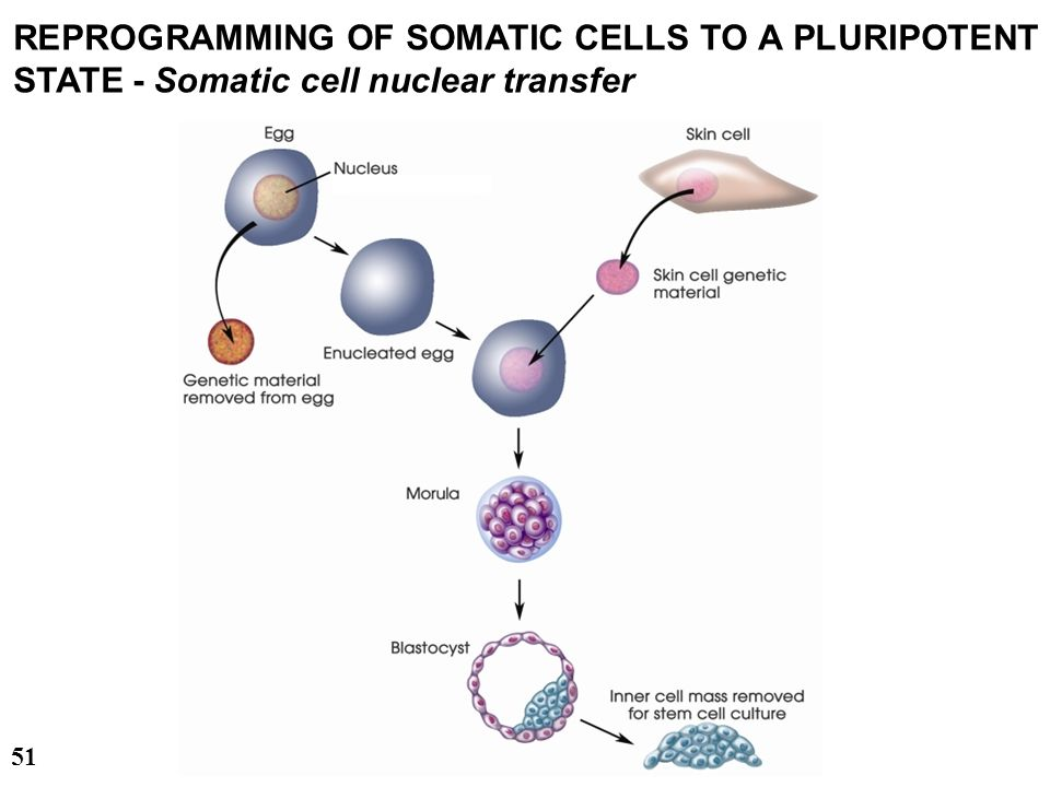 28/03/2017 REPROGRAMMING OF SOMATIC CELLS TO A PLURIPOTENT STATE - Somatic cell nuclear transfer.