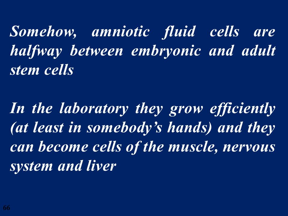 28/03/2017 Somehow, amniotic fluid cells are halfway between embryonic and adult stem cells.