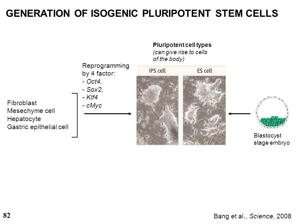 GENERATION OF ISOGENIC PLURIPOTENT STEM CELLS
