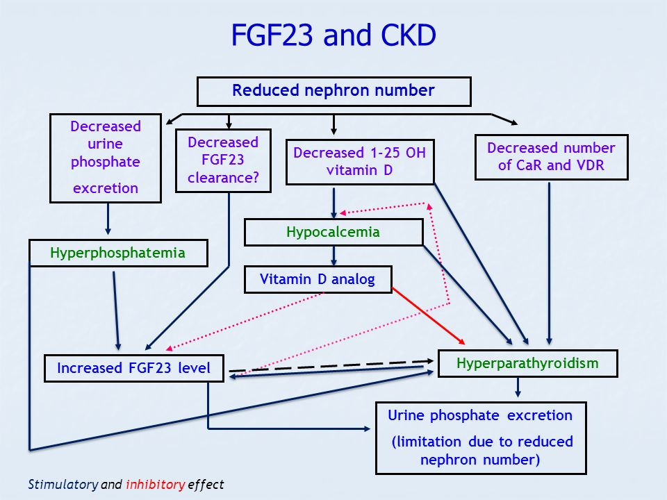 FGF23 and CKD Reduced nephron number Decreased urine phosphate