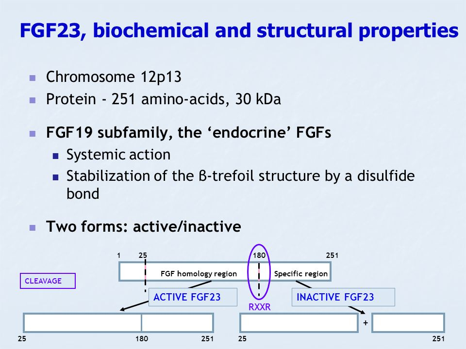 FGF23, biochemical and structural properties