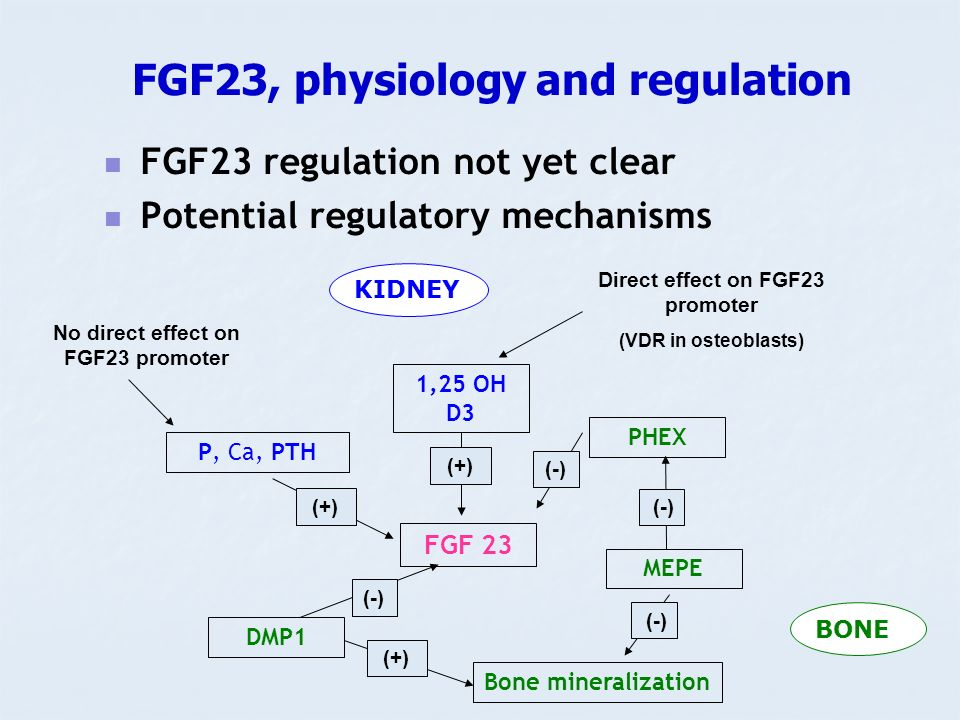 FGF23, physiology and regulation
