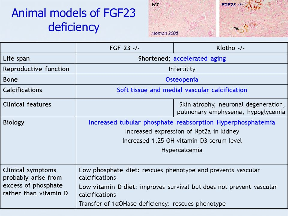 Animal models of FGF23 deficiency