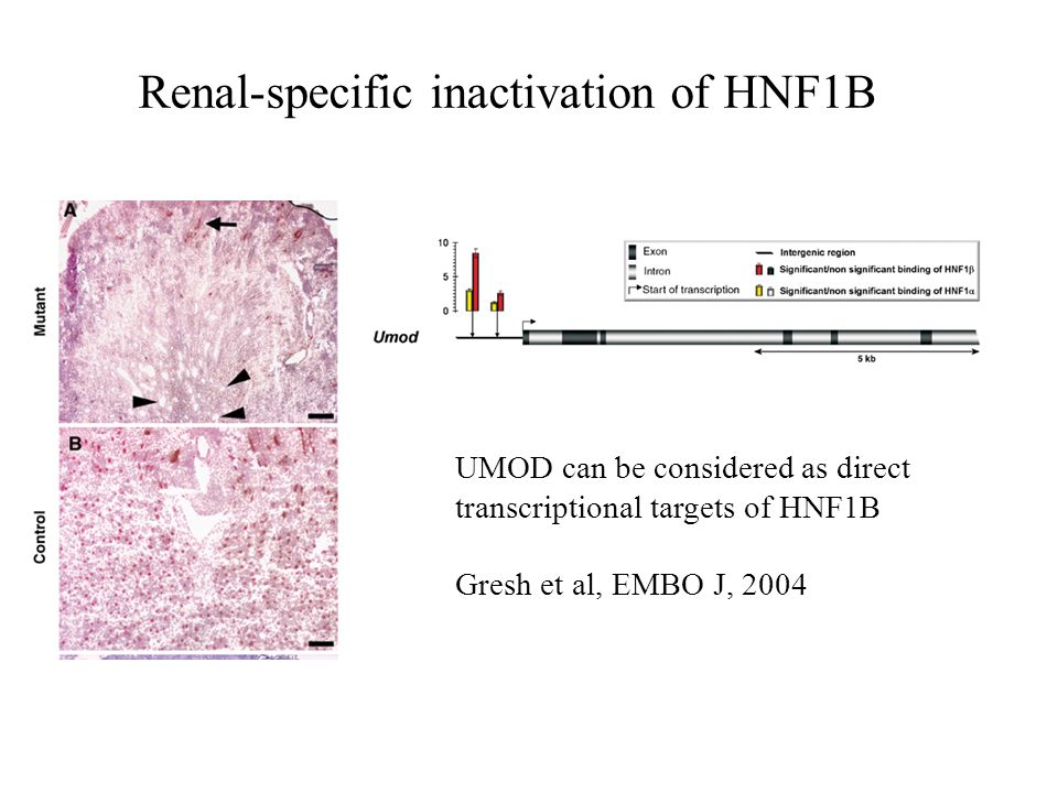 Renal-specific inactivation of HNF1B
