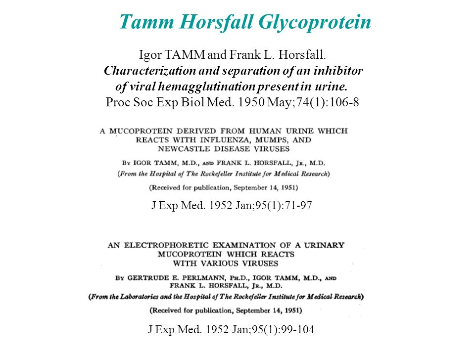Tamm Horsfall Glycoprotein