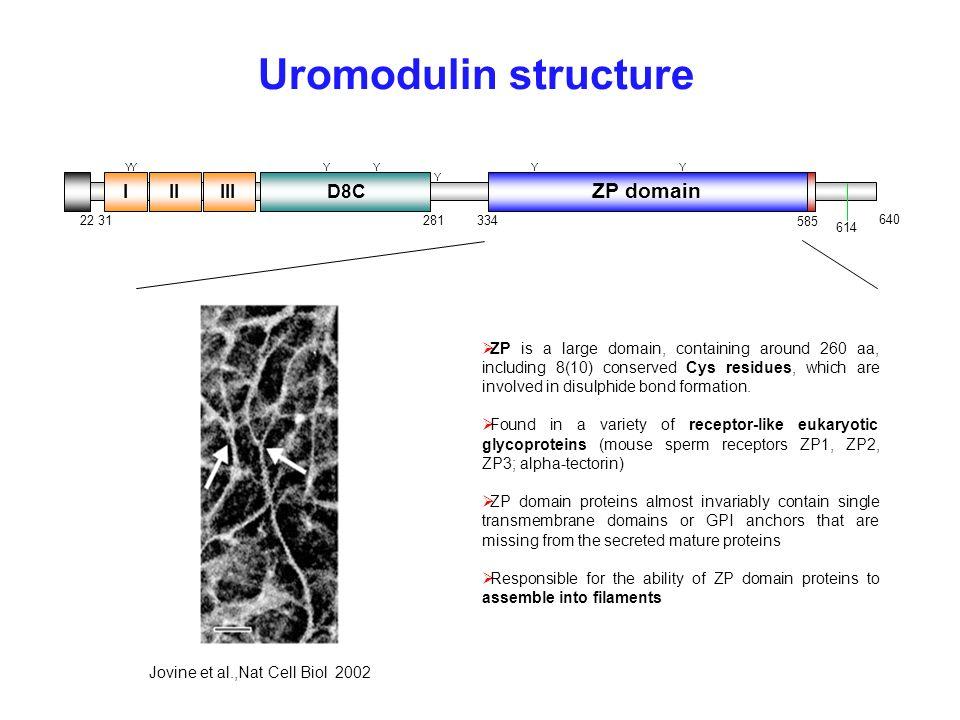 Uromodulin structure ZP domain I II III D8C