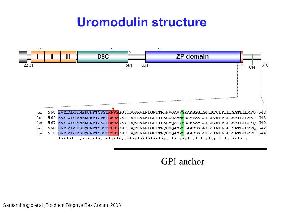 Uromodulin structure GPI anchor ZP domain I II III D8C