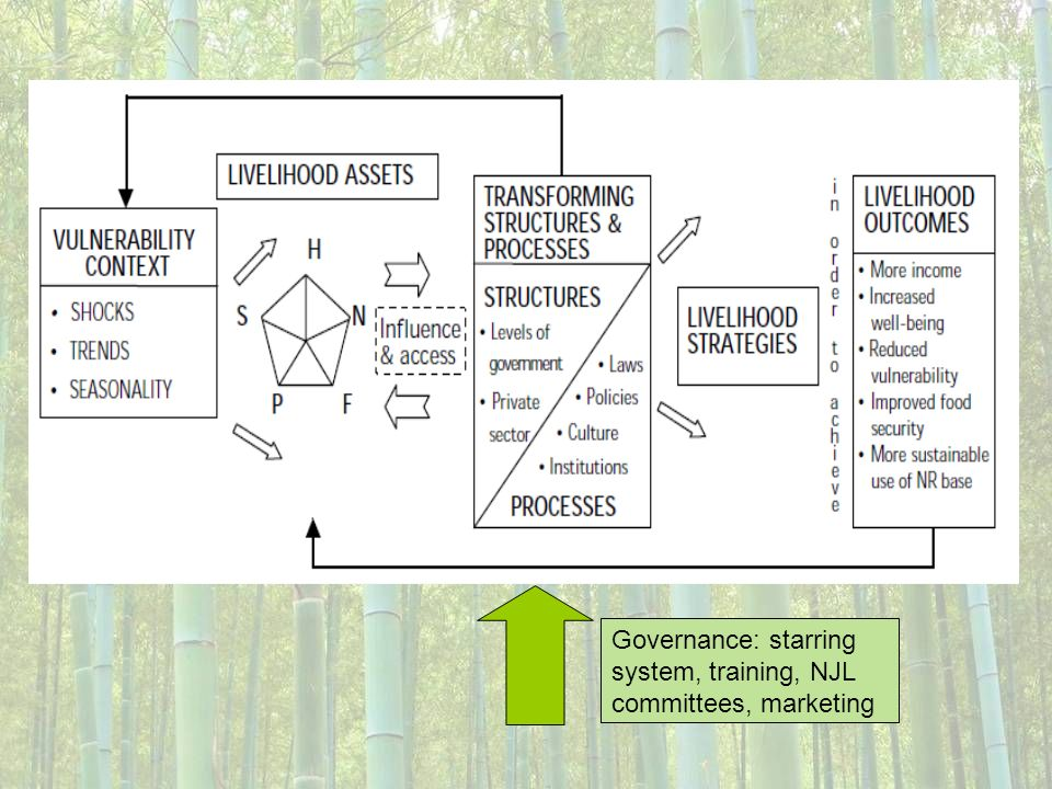 Governance: starring system, training, NJL committees, marketing