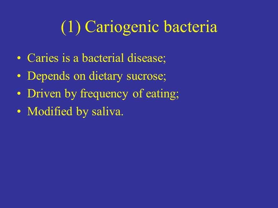(1) Cariogenic bacteria