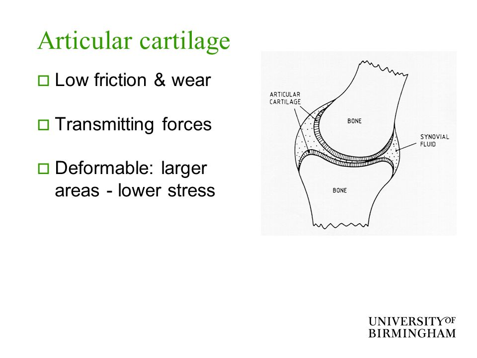 Articular cartilage Low friction & wear Transmitting forces