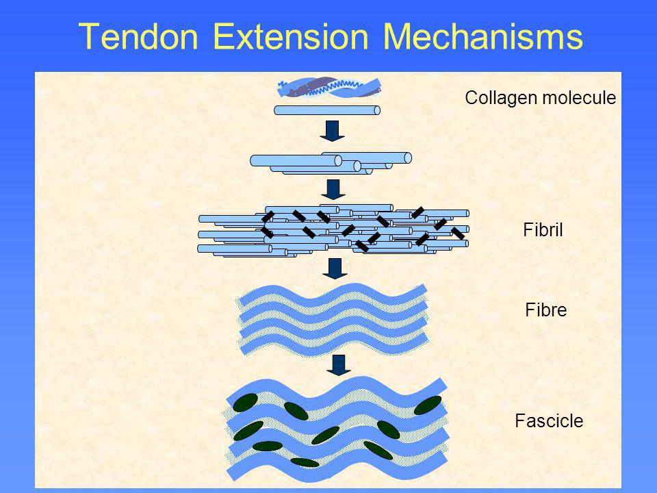 Tendon Extension Mechanisms